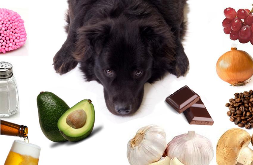 Alimentos proibidos para cães