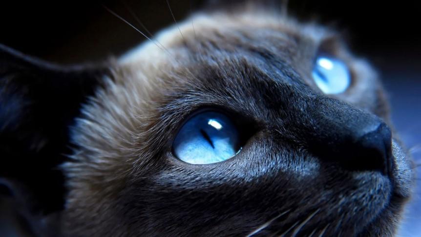 Gato_energia_espiritualidade