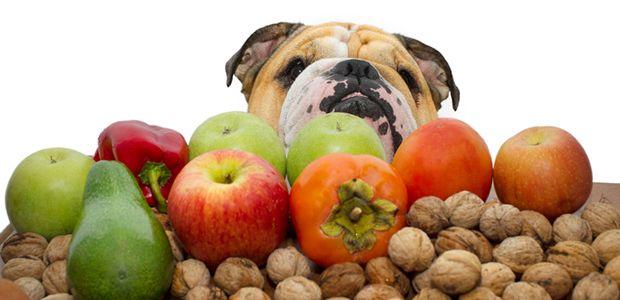 Frutas_cão_saude