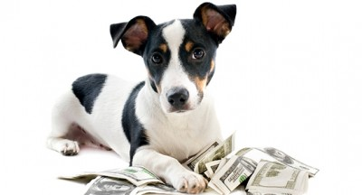 dog-money-1
