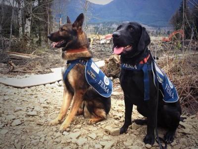 mudslide-disaster-dogs-19928857-o