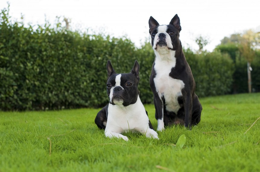 treinar o seu cão