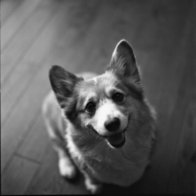 cão sentado