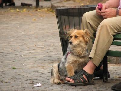 rua cão