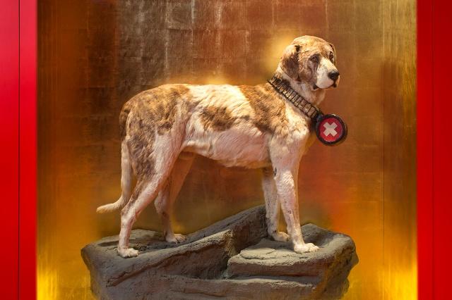 Barry, o cão que salvou 40 vidas - Love Pet Food