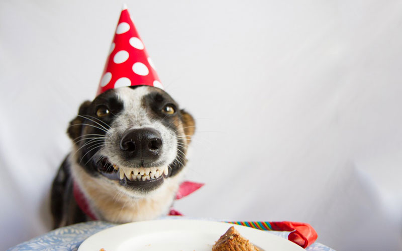 Idade humana do cão