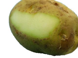 batata verde