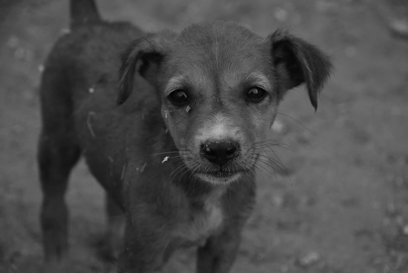 cão-abandonado