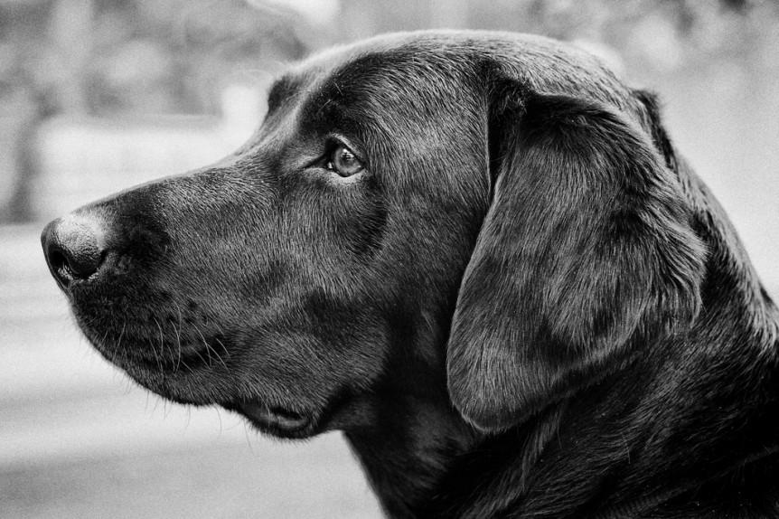 cães têm inteligência emocional
