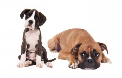 Cães porte grande