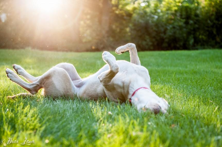 exposição solar do cão