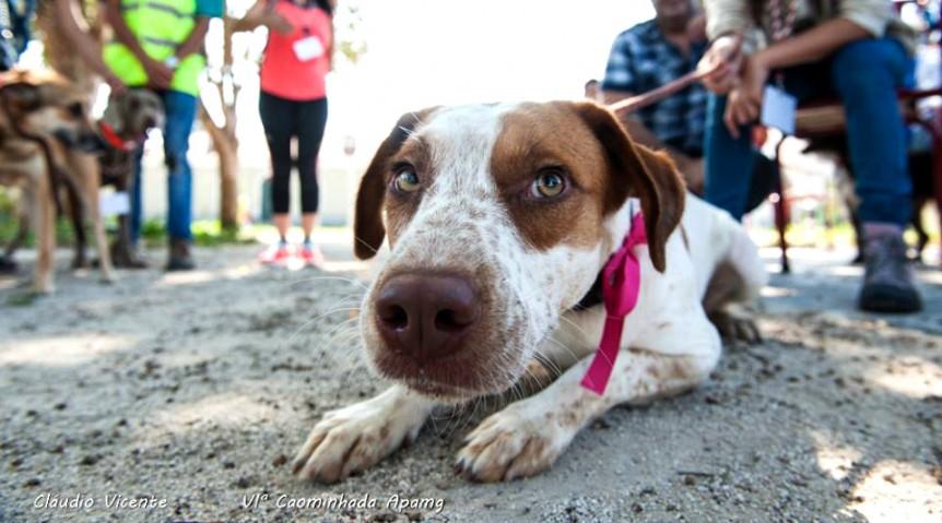 Nem todo o cão tem um dono para amar - Cãominhada APAMG