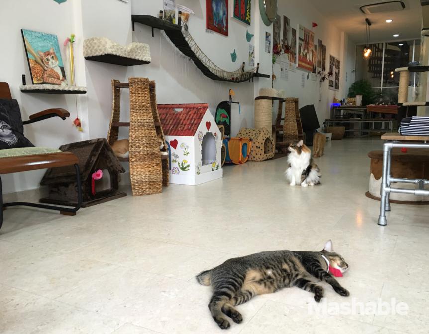 museu gato