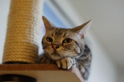 unhas gato