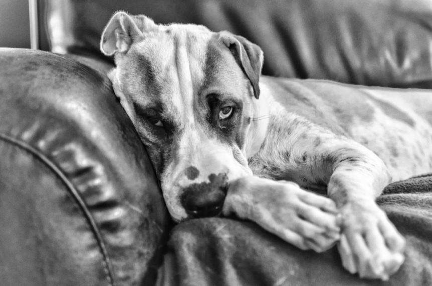 cão fotografias