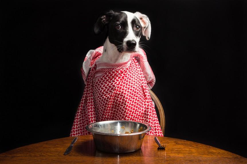 dicas refeição cão