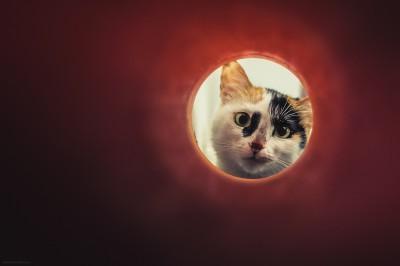 gato felicidade