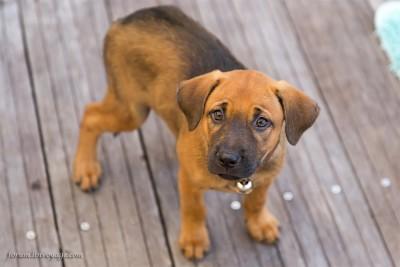cão comandos