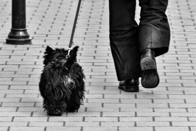 treino cão
