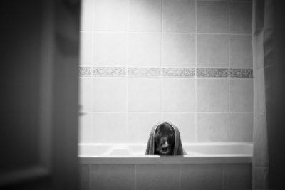 cão banho