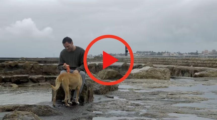salvar cães