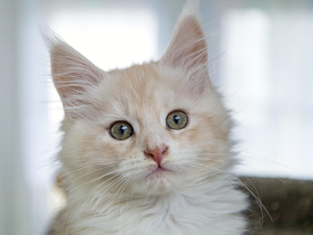 sinais de que o seu gato feliz love pet food